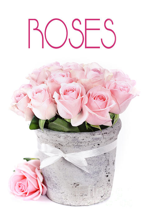 Beautiful  Photograph - Beautiful Pink Roses Valentine by Boon Mee