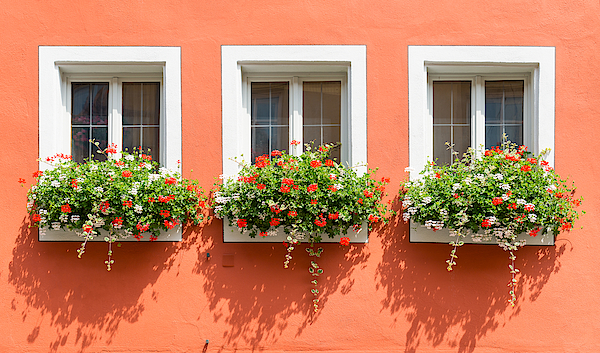 Beautiful Windows With Flowers From Bavaria Photograph by Syolacan