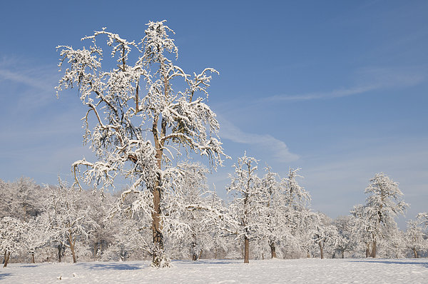 Winter Photograph - Beautiful Winter Day With Snow Covered Trees And Blue Sky by Matthias Hauser