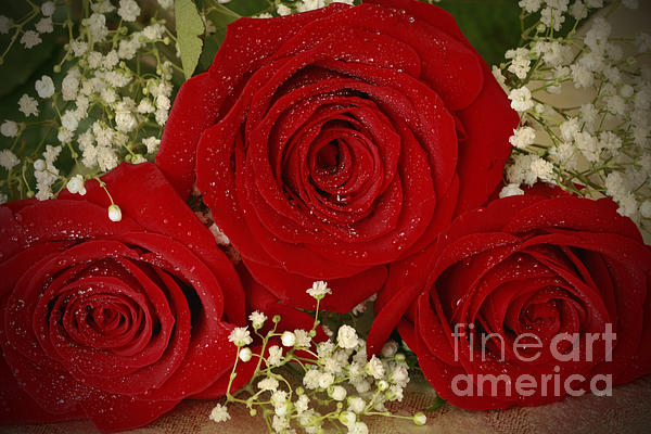 Beauty Photograph - Beauty Of Roses by Inspired Nature Photography Fine Art Photography