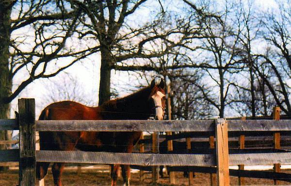 Horse Photograph - Beauty Waiting by Kay Novy