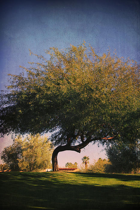 La Quinta Civic Center Park Photograph - Bent But Not Broken by Laurie Search
