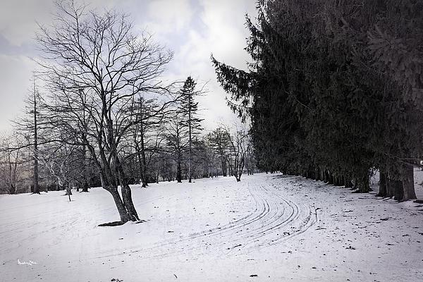 Berkshires Photograph - Berkshires Winter 9 - Massachusetts by Madeline Ellis