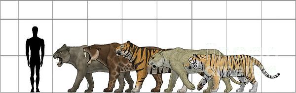 Horizontal Digital Art - Big Felines Size Chart by Vitor Silva