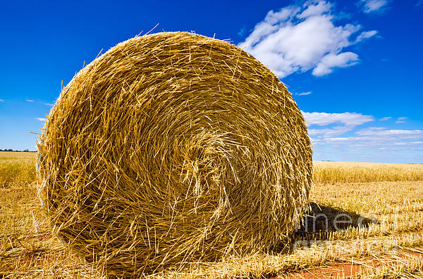 Big Photograph - Big Straw Bales by Boon Mee