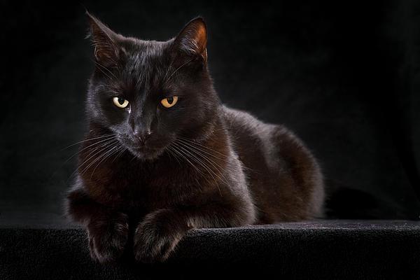 Cat Photograph - Black Cat by Dirk Ercken