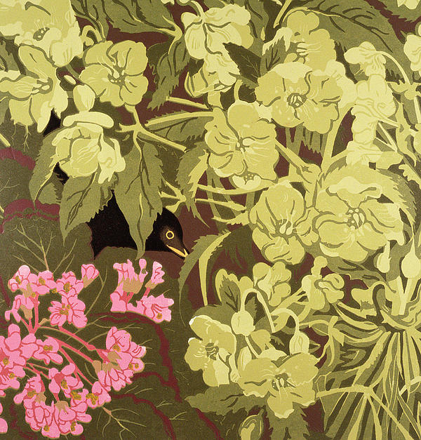 Pink Painting - Blackbird In The Hellebores by Carol Walklin