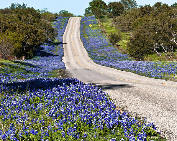 Hwy 152 Photograph - Bluebonnet Lined Hwy by Thomas Pettengill