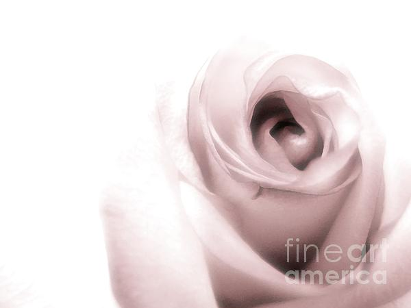 Pale Photograph - Blush by Peggy Hughes