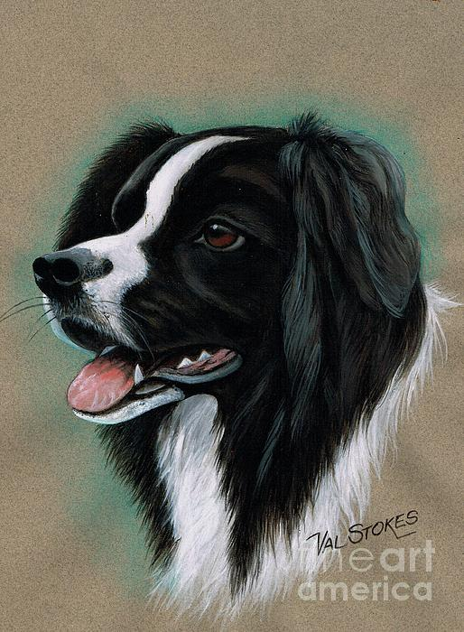 Dog Mixed Media - Border Collie by Val Stokes