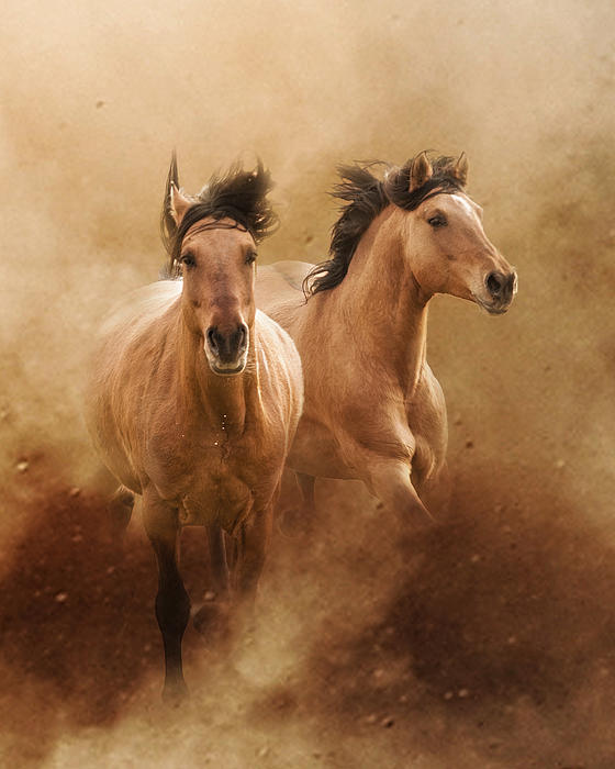 Equine Photograph - Born From Dust by Ron  McGinnis
