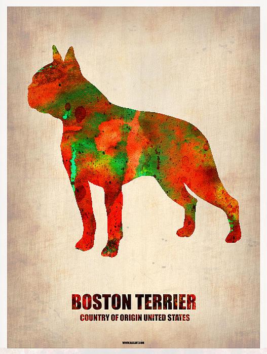 Boston Terrier Painting - Boston Terrier Poster by Naxart Studio