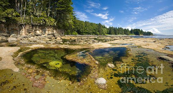 Juan De Fuca Photograph - Botanical Beach by Matt Tilghman