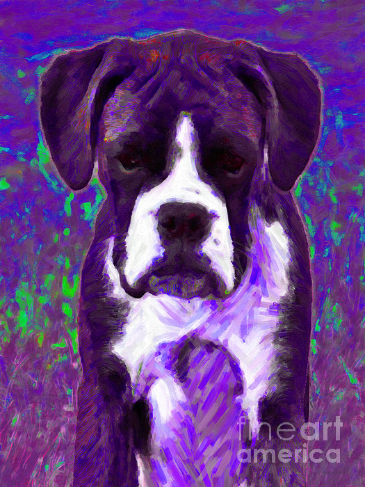 Animal Photograph - Boxer 20130126v6 by Wingsdomain Art and Photography