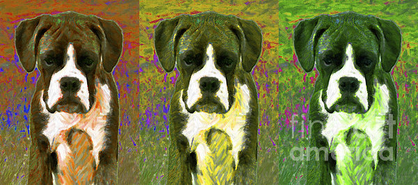 Animal Photograph - Boxer Three 20130126 by Wingsdomain Art and Photography