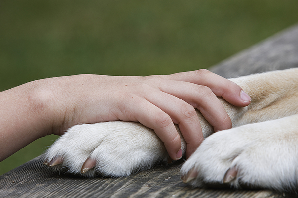 Boys Hand Resting On His Dogs Paw Photograph by Compassionate Eye Foundation/Jetta Productions