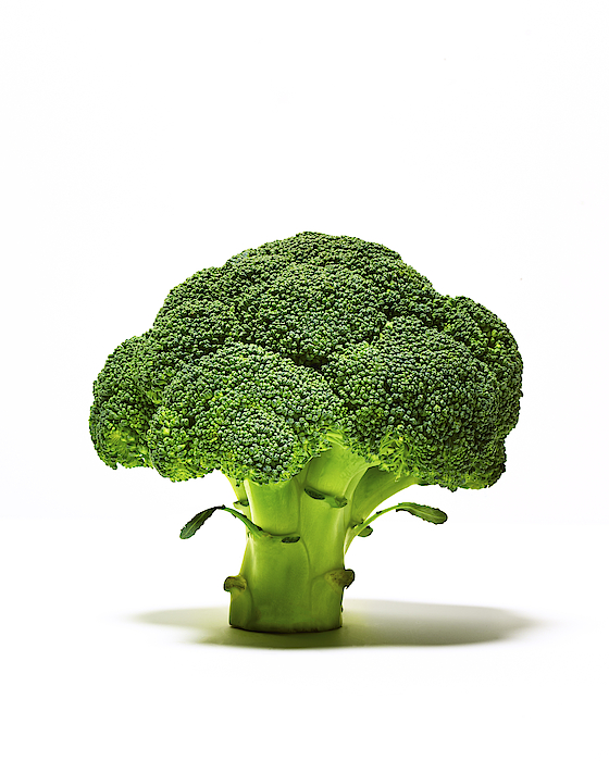 Broccoli Head On Whte Background Photograph by TS Photography