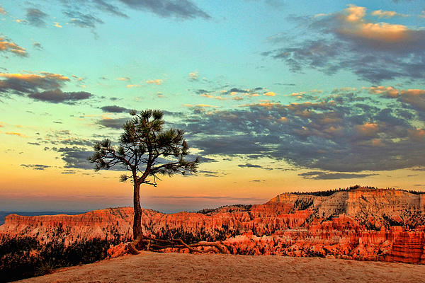 Canyon Photograph - Bryce Canyon by Leslie Kirk