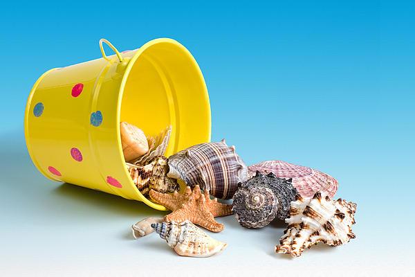 Animal Photograph - Bucket Of Seashells Still Life by Tom Mc Nemar
