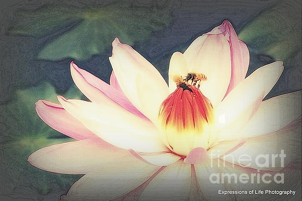Water Lily Photograph - Busy  by Irene Peeples