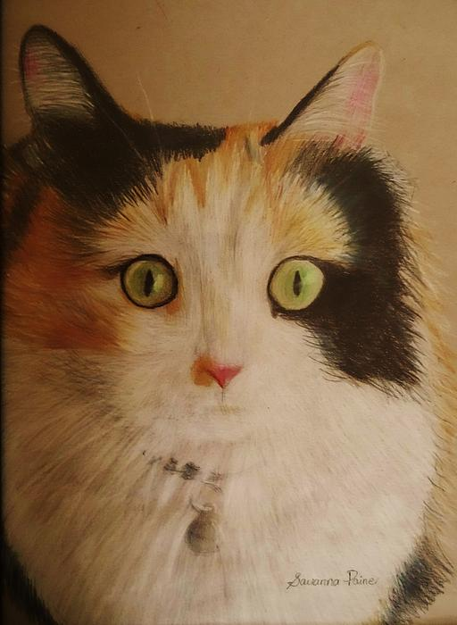 Cat Drawing - Calico Cat by Savanna Paine