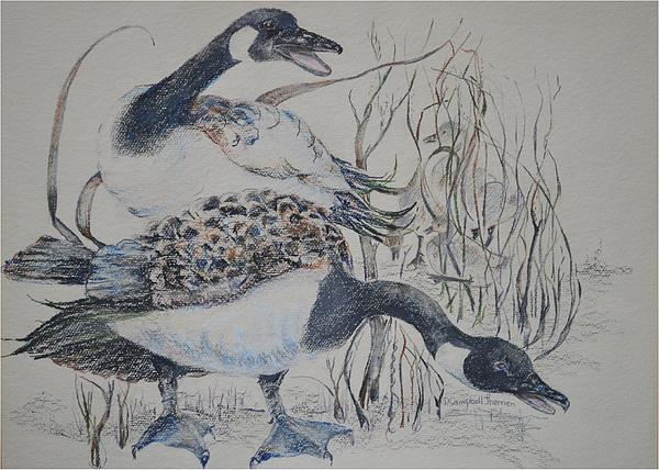 Geese Painting - Canadian Geese by Dorothy Campbell Therrien