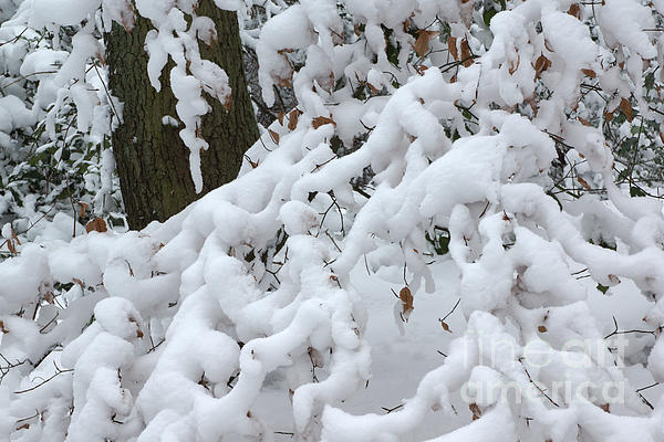 Snow Photograph - Candy Floss Snow by David Birchall