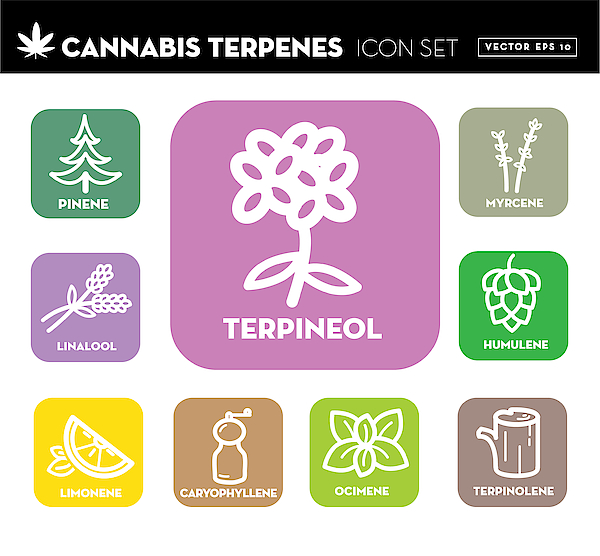 Cannabis Marijuana Ocimene Icon Set With Text Drawing by JDawnInk