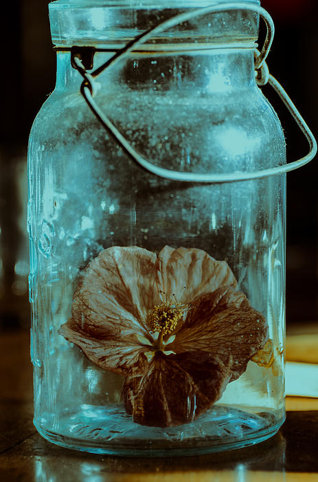 Canning Jars Photograph - Canned Spring by Susan Capuano