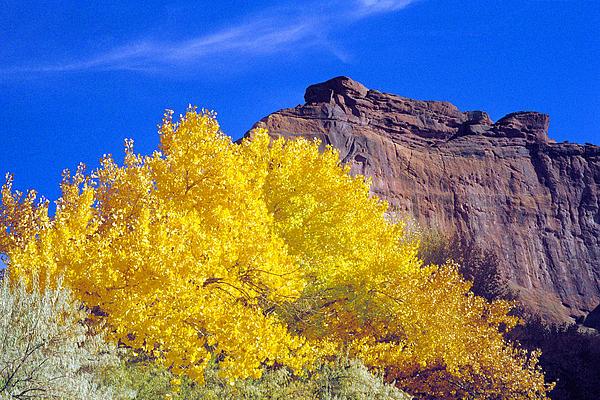 Canyon De Chelly Photograph - Canyon De Chelly Autumn    by Douglas Taylor
