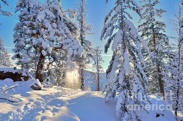 Snow Photograph - Catching The Light by Tara Turner
