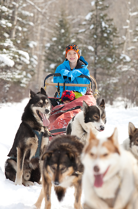 Caucasian Child Sits In Siberian Husky-drawn Sled Photograph by ImagineGolf