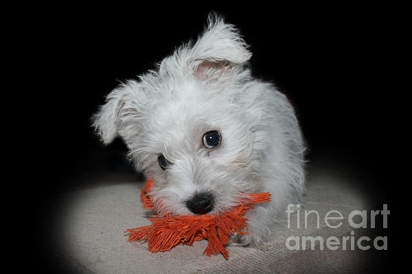 Puppy Photograph - Caught In The Act by Terri Waters
