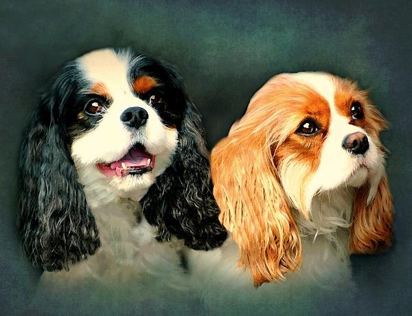 Dogs Photograph - Cavalier King Charles by Diana Angstadt