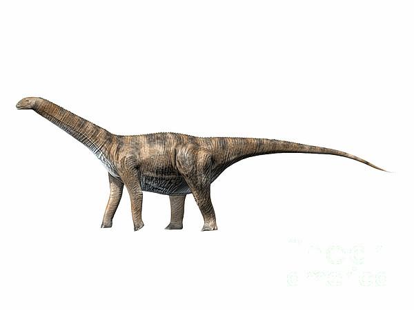 One Animal Digital Art - Cetiosaurus Oxoniensis, Middle Jurassic by Nobumichi Tamura