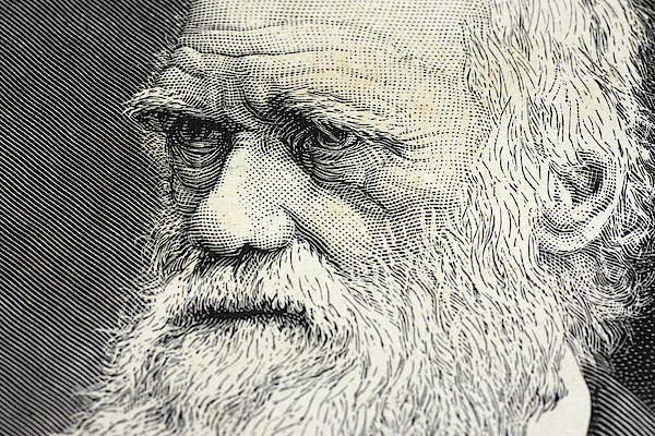 Charles Darwin Portrait Engraving Photograph by Rolbos