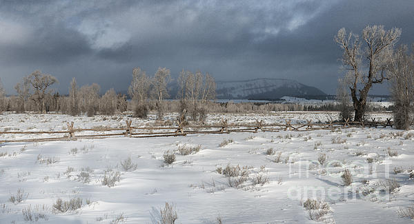 Grand Teton Photograph - Clearing Storm In The Tetons by Sandra Bronstein