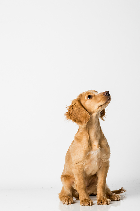 Close-up Of Dog Sitting Against White Background Photograph by Peter Rose / EyeEm
