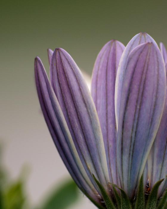 Flower Photograph - Closing Time by Stan Wojtaszek