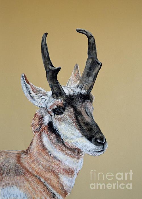Colorado Pastel - Colorado Plains Antelope by Ann Marie Chaffin