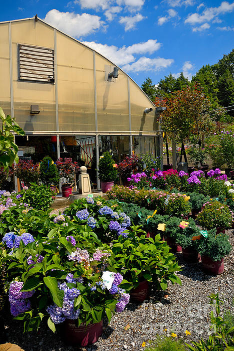 Cloud Photograph - Colorful Greenhouse by Amy Cicconi