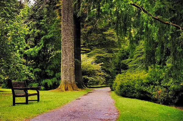 Scotland Photograph - Come Sit With Me. Benmore Botanical Garden. Scotland by Jenny Rainbow