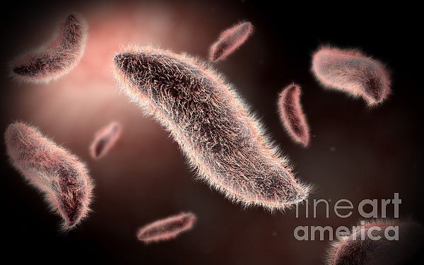 Color Image Digital Art - Conceptual Image Of Paramecium by Stocktrek Images