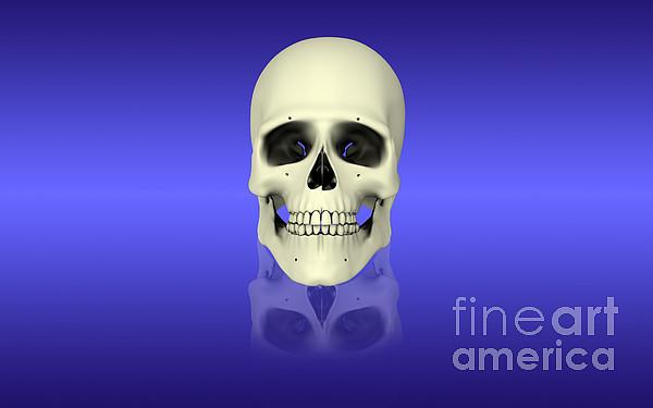 Horizontal Digital Art - Conceptual View Of Human Skull by Stocktrek Images