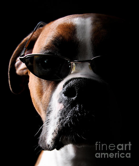 Dog Photograph - Cool Dog by Jt PhotoDesign