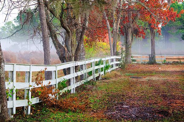 Fall Photograph - Coosaw Horse Fence by Scott Hansen