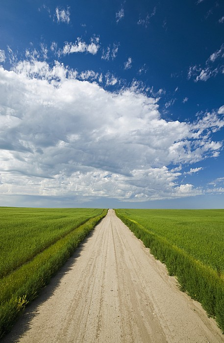 Agriculture Photograph - Country Road Through Grain Fields by Dave Reede