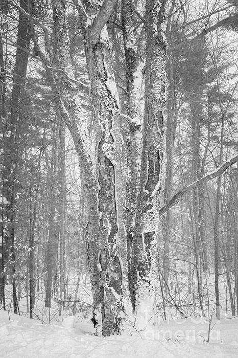 Trees Photograph - Couple Of Characters by Sue OConnor