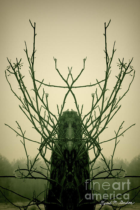 Archetype Photograph - Creature Of The Wood by David Gordon