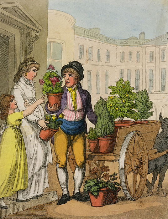 Crier Drawing - Cries Of London The Garden Pot Seller by Thomas Rowlandson